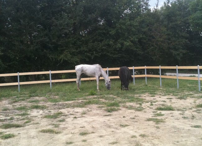 La recinzione elettrica no grazie sono un ansiosa la for Recinzione elettrica per cavalli